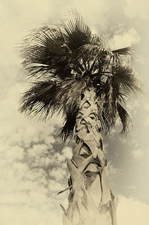 Palme  by Peter Bergmann
