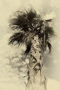Palme  von Peter Bergmann