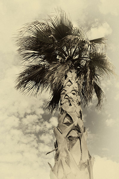 Palme-sw-vintage