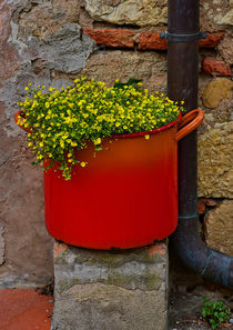 flower pot - BlumenTopf von Peter Bergmann