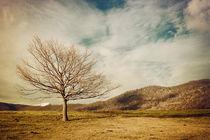 Tree von Salvatore Russolillo