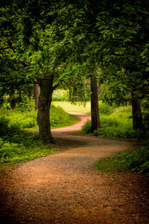 The Path to the Light can be Winding by Colin Metcalf