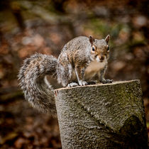 Gimme a Nut by Colin Metcalf