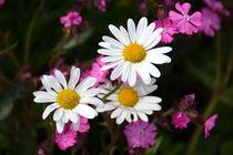 Leuchtende Blumenwiese von gugigei