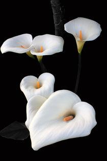 Lilies von Aidan Moran