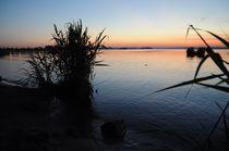 Evening on the lake by Natalia Akimova