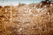 Field von Salvatore Russolillo