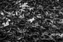 maple leaves on the ground von timla