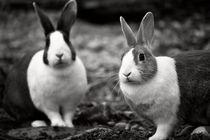 Bunny Buddies von Vicki Field