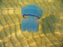 Jellyfish by Yuri Hope