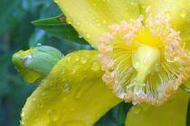 Yellow in the rain  by Art of Irene S.
