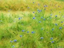 Little Blue in Fields by Sandra  Vollmann