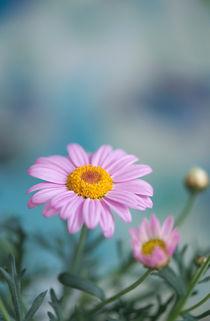Blumengruß / 30 von Heidi Bollich