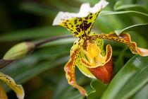 .orchid. by Katarzyna Körner