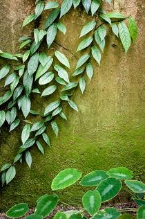.green. von Katarzyna Körner