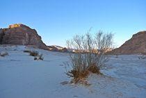 Sinai168