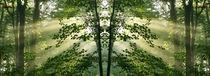 Lichtzauber im Wald von Sabine Radtke