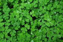 grüner Teppich by gugigei