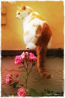 Cat and Roses Nr 1 by Sandra  Vollmann