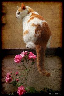 Cat & Roses Nr.2 von Sandra  Vollmann
