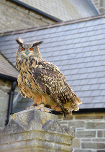 Bengal Eagle Owl by Harvey Hudson