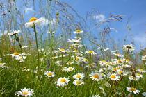 Flowerpower von gugigei