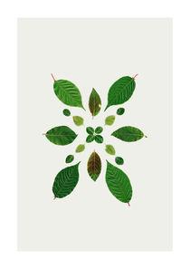 Leaves of June 2 by Wibke Murke