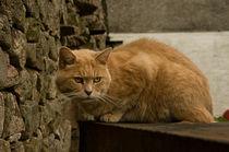 Grumpy Cat von Jacqi Elmslie
