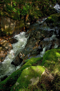 Tumbling Stream Mossy Stones by Jacqi Elmslie