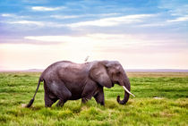 Elefant - Kenia von Viktor Peschel