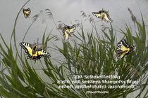 Chaostheorie - Ein Schmetterling kann ..... by Chris Berger