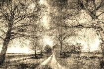 The Summer Farm Track Vintage by David Pyatt