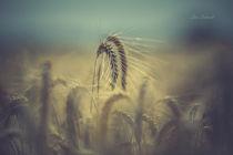 Getreidefeld im Hochsommer von Lisa Schmidt