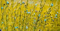 gelb türkise Blumenwiese von Lisa Schmidt