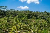 Rice terrace, Bali by Kevin  Keil