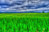 Culloden Storm by Ed The Frog