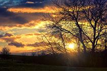 Sunthroughtree
