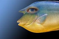 Fischblauge-bearbeitet-3