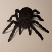 Spinne von Angelika Wegner