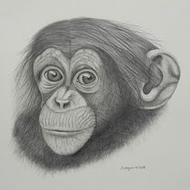 Schimpanse von Angelika Wegner