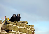 Two Jackdaws by Harvey Hudson