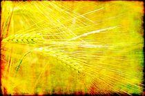 Grain Getreide  von Sandra  Vollmann