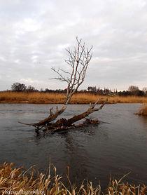 Wächter des Oderwassers... von voelzis-augenblicke