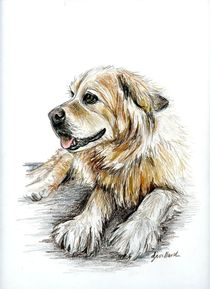 Beautiful Dog Named Abby by Deborah Willard