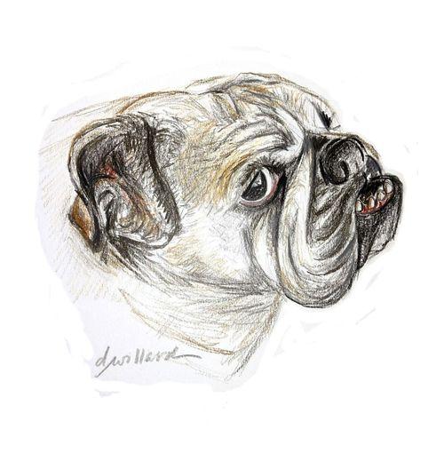 Lilly-bulldog-square-for-pod-upload