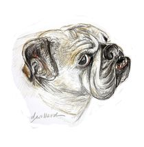 Portrait of Bulldog named Lily by Deborah Willard