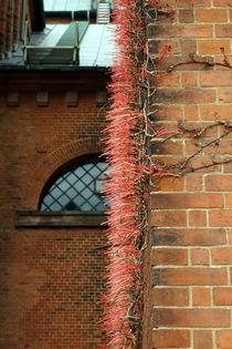 Herbstliche Borstenwand von Sabine Radtke