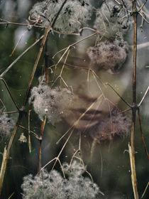 Lianen by Chris Berger