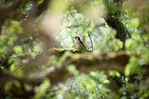 .green.woodpecker. von Katarzyna Körner