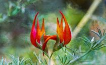 Lotus Vine Flower by Michael Moriarty